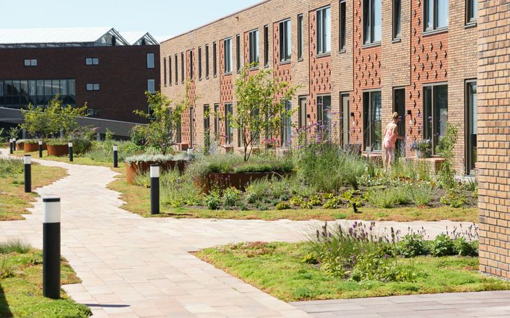Op het winkelcentrum Hanzewijk in Kampen is een daktuin gerealiseerd naar ontwerp van tlu landschapsarchitecten.