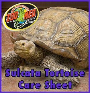 Check out Zoo Med's custom Care Sheet for Sulcata #Tortoises. Find more Care Sheets available on our website.