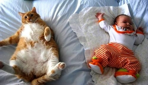 teeheeeee: Big Cat, Cute Cat Pictures, Baby Kids, Fat Fat, Kids And Pet, Fat Cat, Funny Photos, Hate Cat, Animal