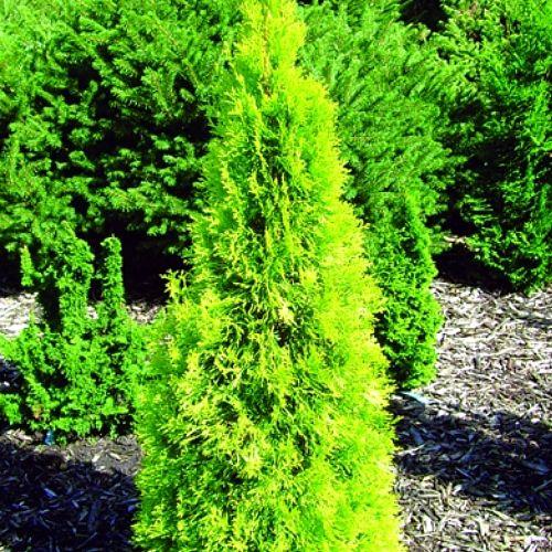 Japanese Garden Ideas Landscaping Beautiful