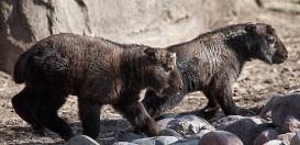 Zoo names 2 new baby Takins