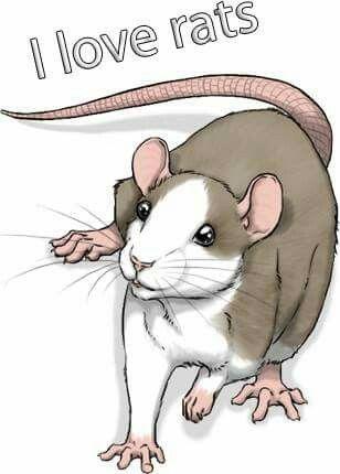 Rat art