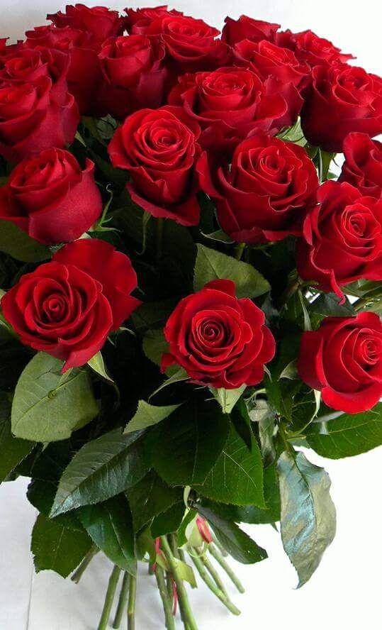 Ramo De Rosas Beautiful Rose Flowers Red Flowers Flower Decorations