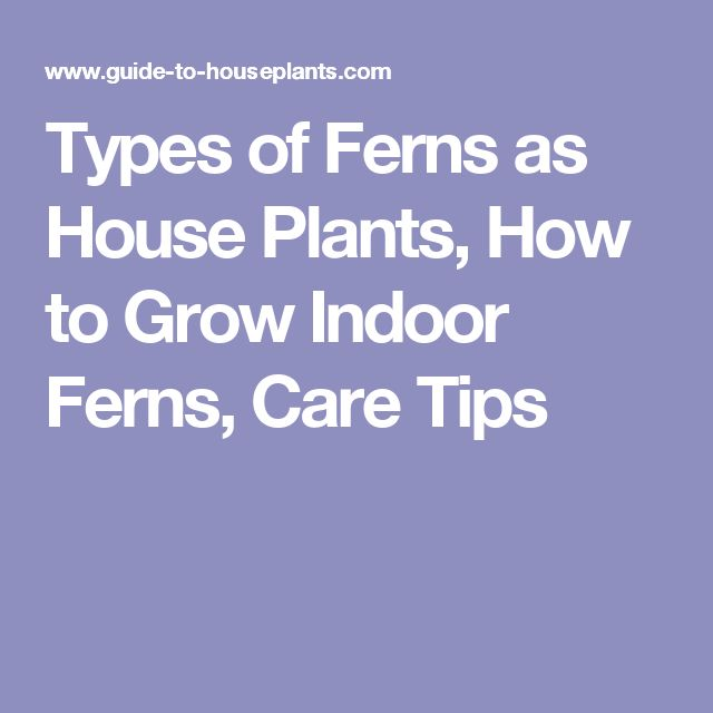 Types of Ferns as House Plants, How to Grow Indoor Ferns, Care Tips
