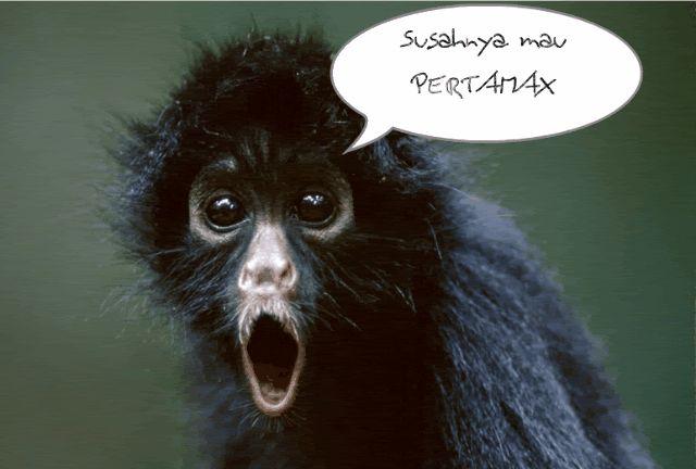 Big Lip Monkey Pics Funny Giff #9891 - Funny Monkey Giffs| Funny Giffs| Monkey Giffs