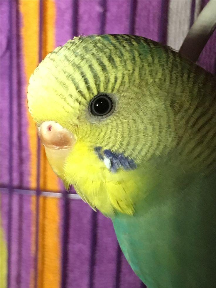 Kiwi(Pretty birdie)
