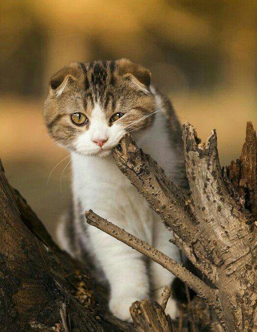 Eğlenceli Gerçekler | kedi Latte +
