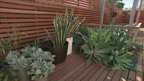 28 best unobtrusive pool fencing images on pinterest for Low maintenance plants for garden beds