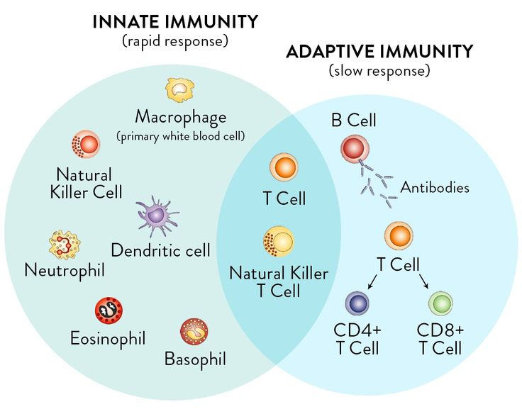 Innate and Adaptive Immune System