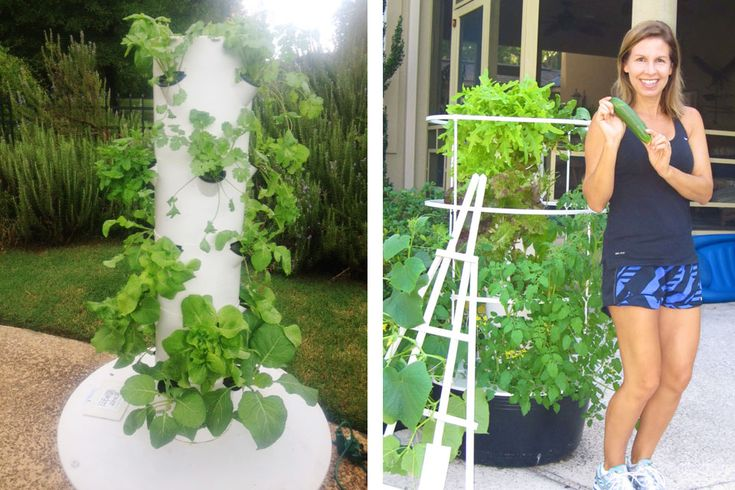 93 Best Aeroponics Images On Pinterest