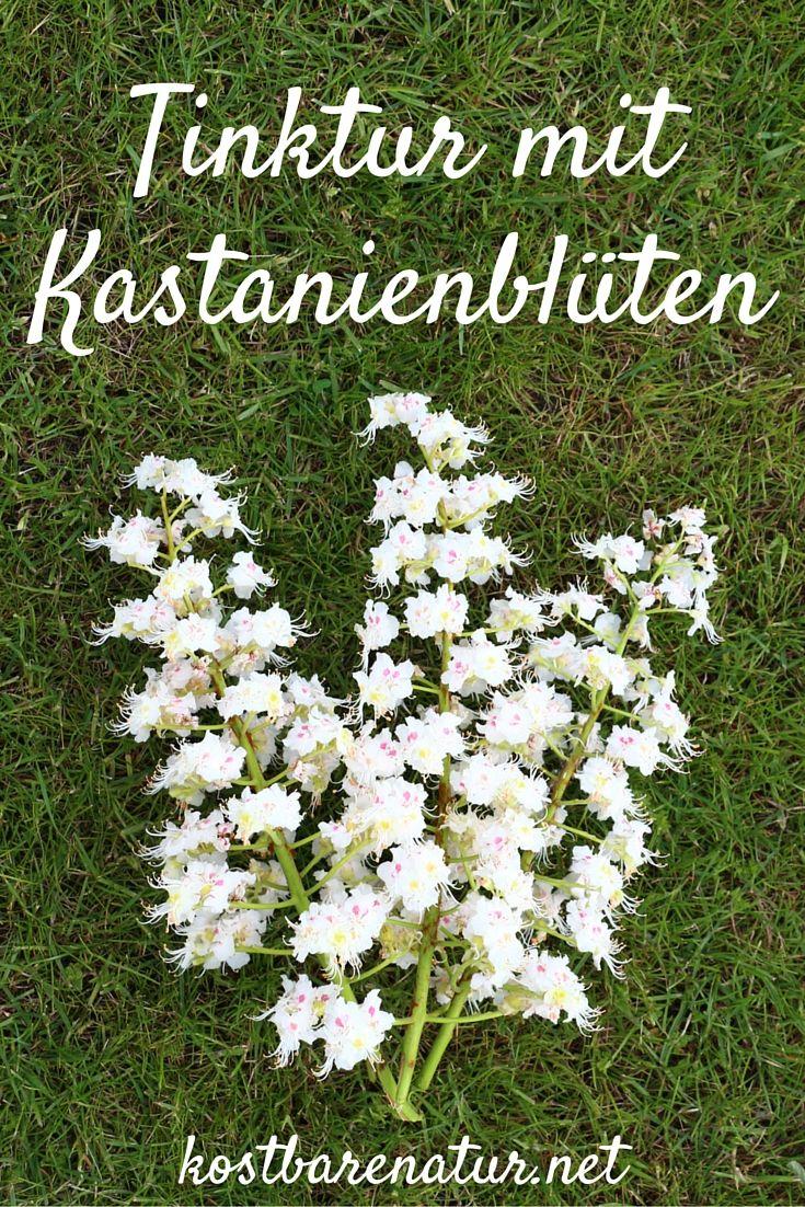 Die Blüte der Kastanie ist im Frühjahr ein Augenschmaus! Wusstest du aber, dass die Blüten wertvolle Wirkstoffe, z.B. gegen Krampfadern beinhalten?
