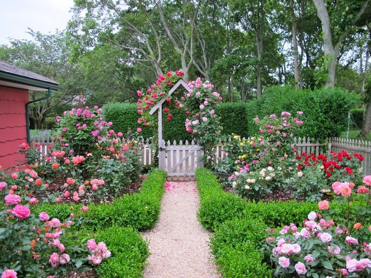 111 best Year of the Rose 2017 images on Pinterest | Vegetable ... English Rose Garden Design Id on rosary garden designs, simple garden designs, small urban garden designs, small formal garden designs, no maintenance garden designs, terrace garden designs, herb garden designs, fairy garden designs, minecraft garden designs, sun garden designs, school garden designs, front garden designs, unique garden designs, small garden fence designs, country garden designs, bamboo garden designs, amazing garden designs, outdoor garden designs, back garden designs, witch garden designs,