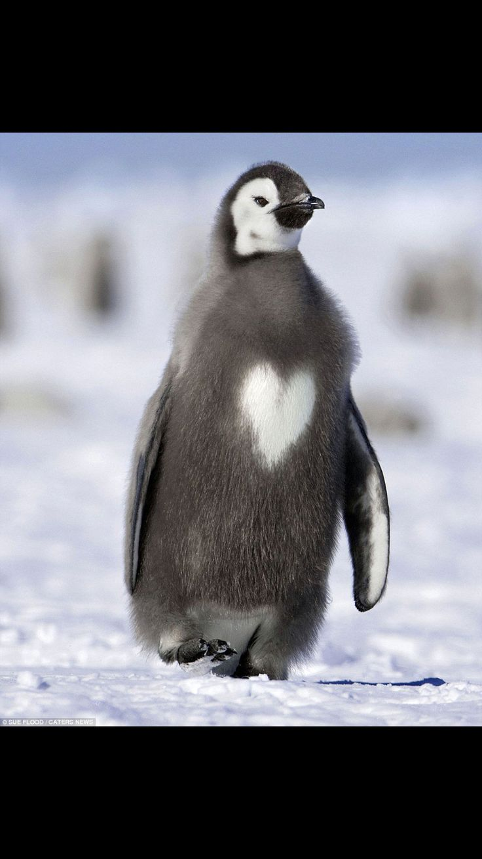 Lovie pengu