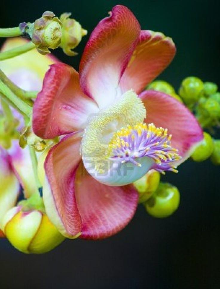 The 25 best arbre exotique ideas on pinterest planter for Entretien hibiscus exterieur