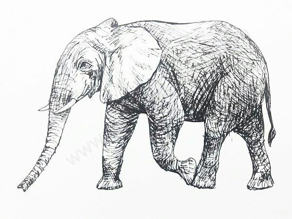 How to Draw a Elephant In 13 Steps with Pictures