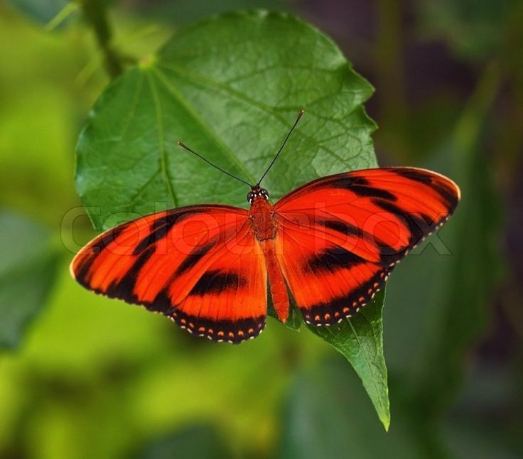 Real Red Butterflies in Nature | Stock image of 'Red ...
