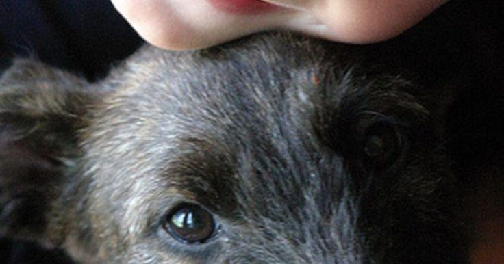 Cómo comparar la anatomía de un perro y un humano. La comparación de la anatomía de un perro y un humano deben necesariamente involucrar todo el cuerpo: los humanos y los perros comparten las mismas estructuras molecular y celular, órganos y sistemas pudiendo ver las diferencias sólo en la fisiología y la estructura.