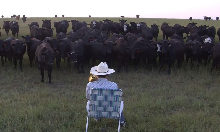 Farmer Serenades His Cows With A Trombone Cover Of Lorde's 'Royals' You've got to watch the whole thing. Look at how the cows are lined up so perfectly at the end!