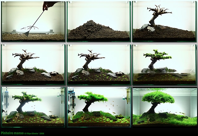 Landscape fish tank aquariums pinterest fish tanks Aquarium landscape