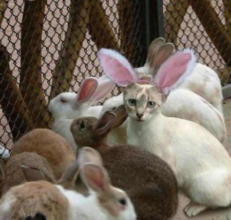 so far so good: Dogs Pics, Animal Pictures, Funny Bunnies, Funny Pics, Funny Cat, Funny Pictures, Easter Bunnies, Funny Pet, Baby Cat