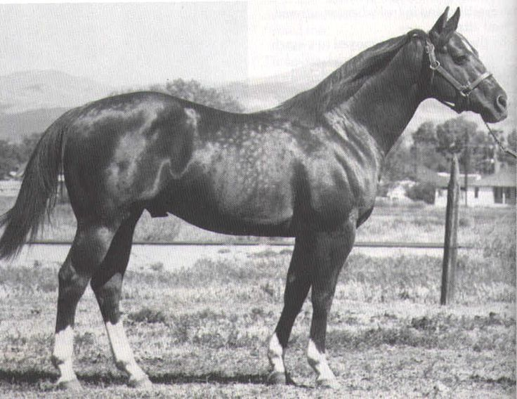 Doc Bar - One of the first horses we owned, had Doc Bar blood lines..very nice horse...miss him too :(