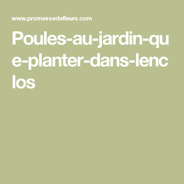 Poules-au-jardin-que-planter-dans-lenclos