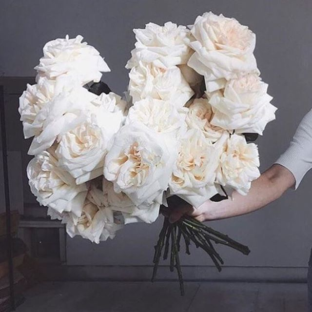 • BLOOMS • White roses via @the_lane • #roses #flowers #blooms #inspo #whiteflowers #florist #whiteroses  #Regram via @onedaybridal