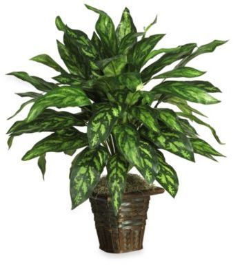 Bed Bath & Beyond Nearly Natural Silver King Silk Plant with Basket