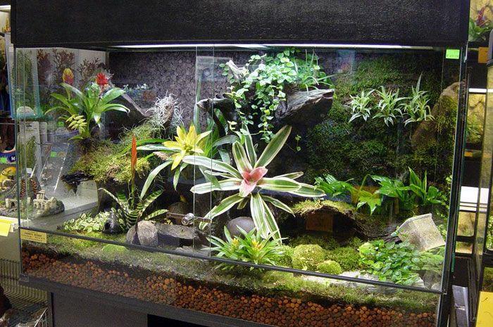Aquariums Turned Terrariums Swamp Terrarium Terrariums