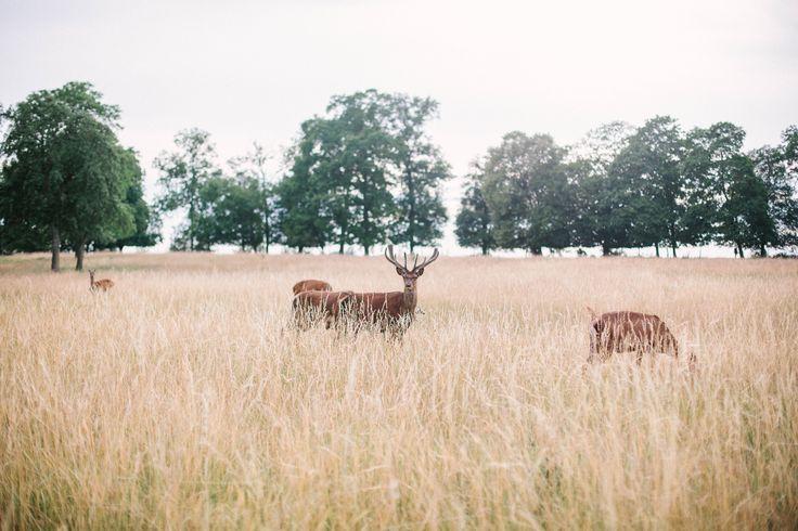 Deer family in a field, wedding in France