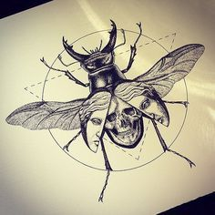 insect with skull on back - Google Search