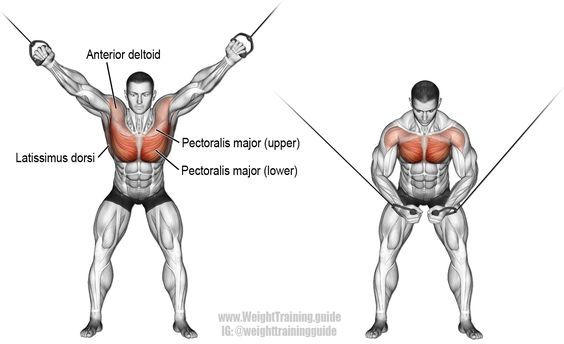 High cable crossover. An isolation push exercise. Muscles worked: Lower Pectoralis Major, Upper Pectoralis Major, Pectoralis Minor, Rhomboids, Levator Scapulae, Anterior Deltoid, and Latissimus Dorsi.