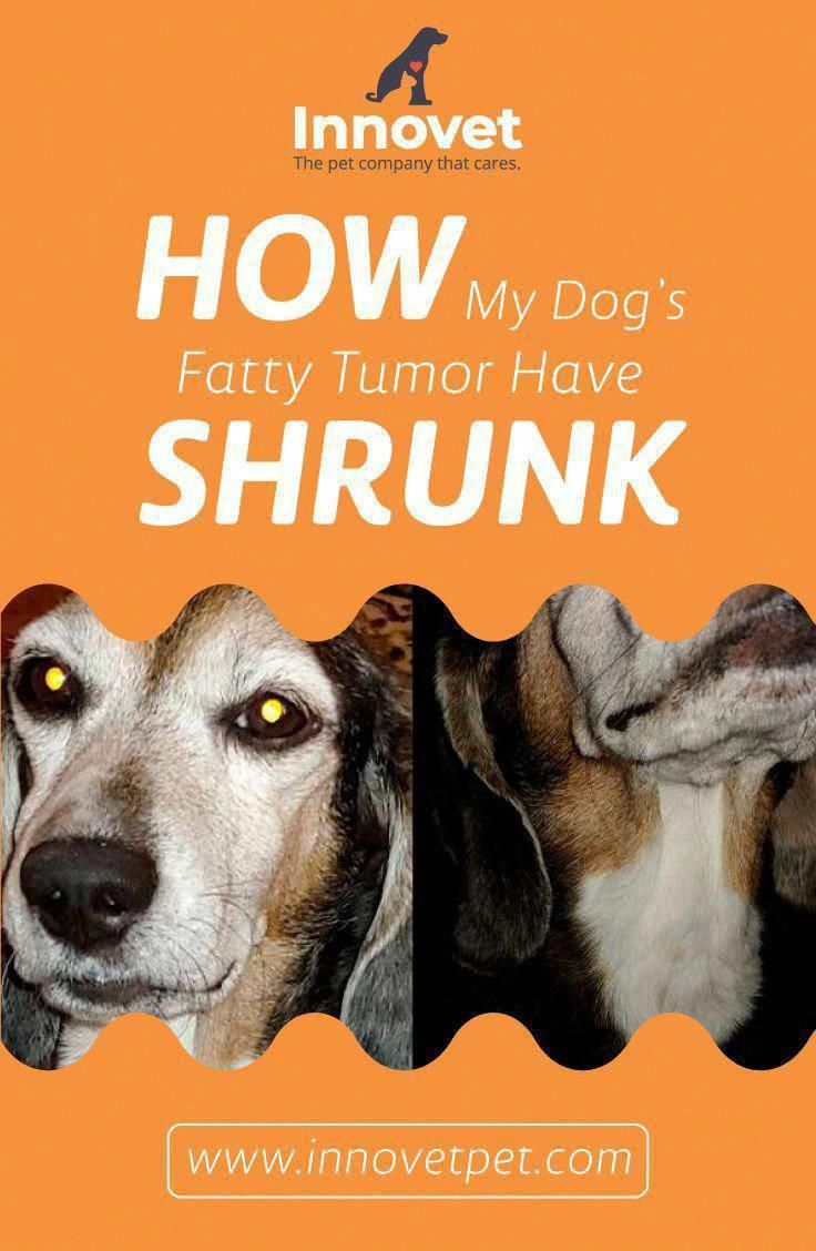 Do You May Have A Lump On Your Neck Back Or Behind Your Ear This Really Is What It Means Skinlumponback Tumor Pet Companies Neck