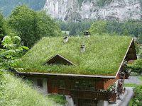 Pensieri & Parole: House for trees - Case con i tetti verdi