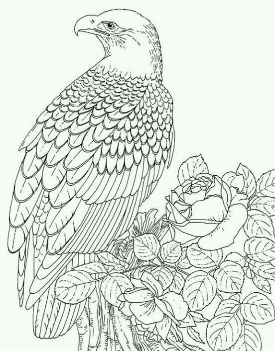21 best Eagle Coloring Pages images on Pinterest Eagles
