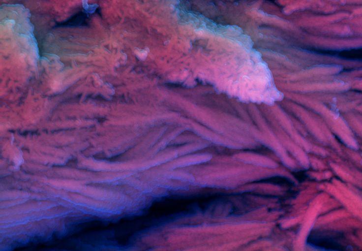DDC-SEM of fossil - purple - 1.jpg