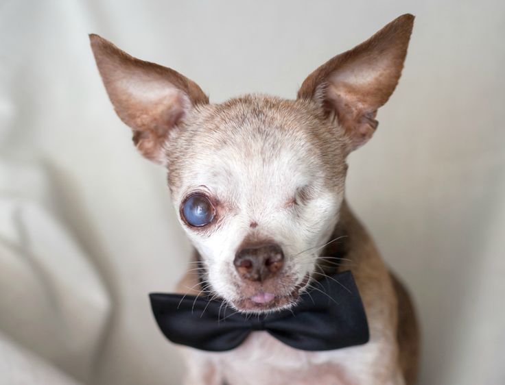 This Is Harley. He Helped Free Over 700 Other Dogs From Puppy Mills.