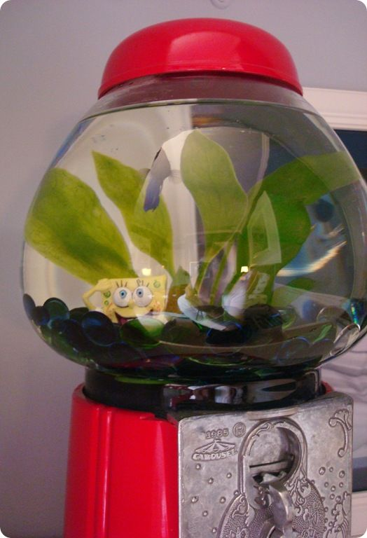 57 best gumball machines images on pinterest bubble gum for Gumball machine fish tank