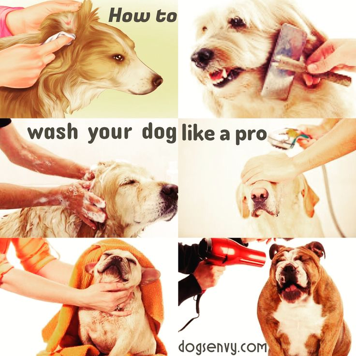 How to wash your dog like a pro