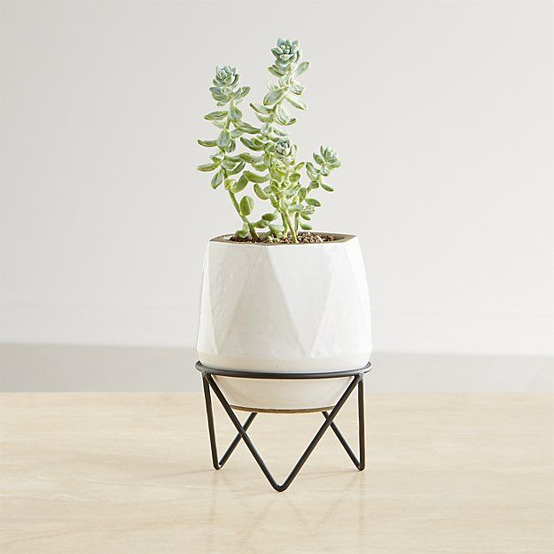 Aaro Small Geo Planter With Stand Reviews Crate And Barrel