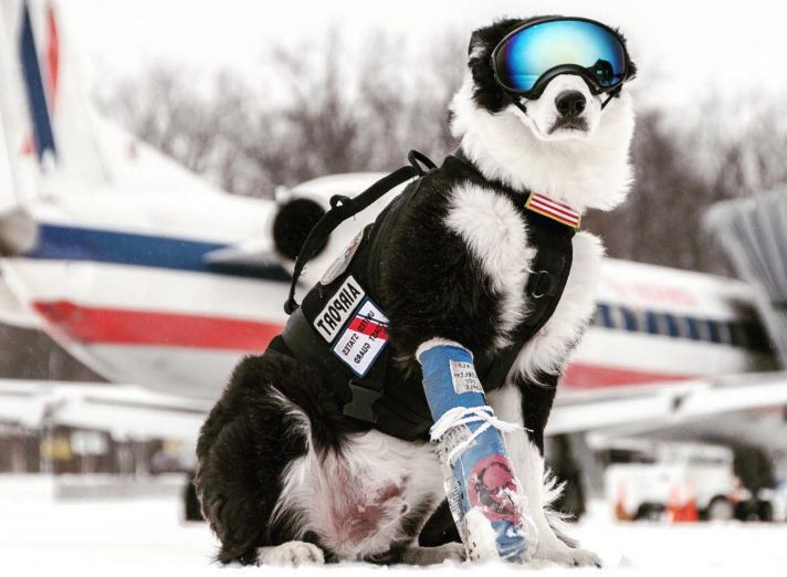 Border Collie Piper At Traverse City Airport Mi He