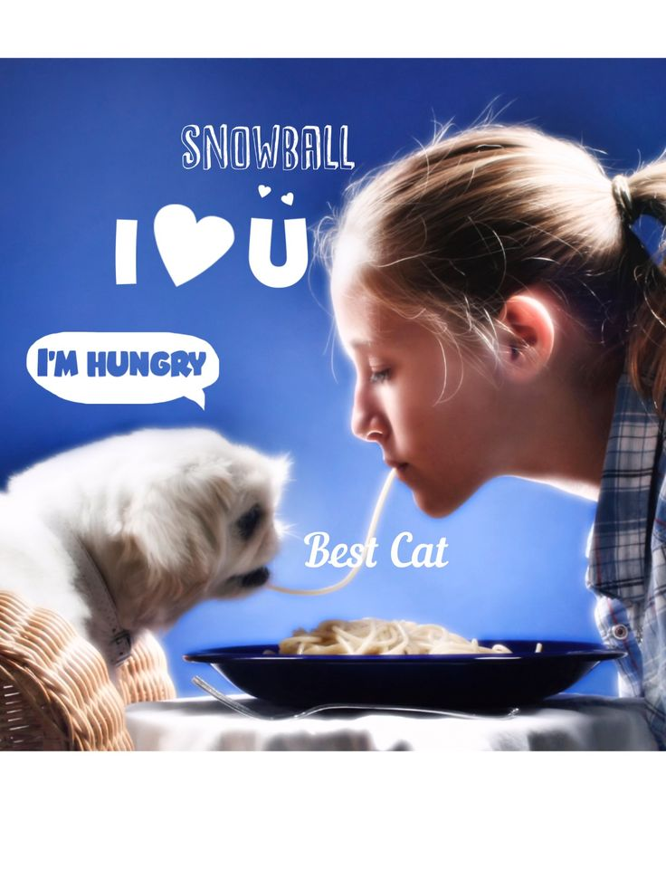 #love your #pet treat them to lunch and have a fun #caturday @babystudiopro #babystudiopro