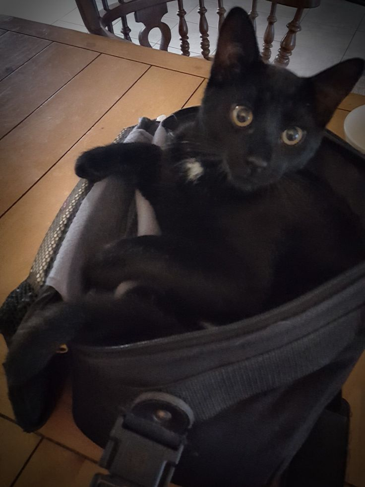 Alistair the kitten in my camera bag...