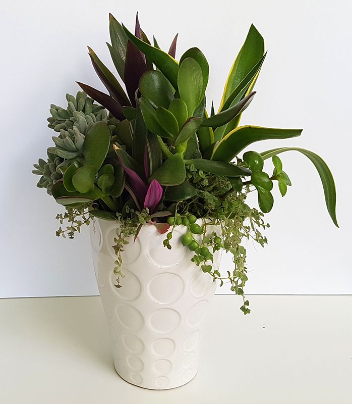 White vase now holds a living bouquet that will continue growing in beauty.