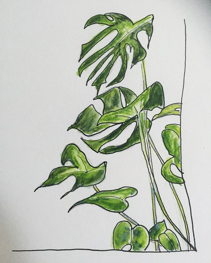 Plant doodle. Watercolour pencil and ink