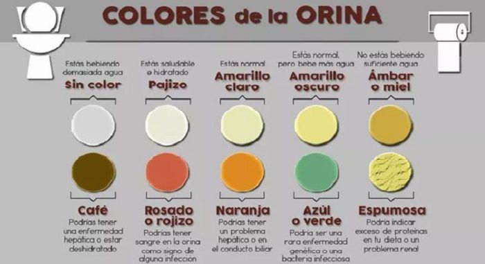 El Color De La Orina Dice Todo Sobre Tu Salud Esto Es Lo Que Significa Su Color Y Que Podría Andar Mal En Tu Cuerpo Salud Noticias Color De