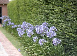 35 best images about flores para canteros on pinterest for Canteros de jardin
