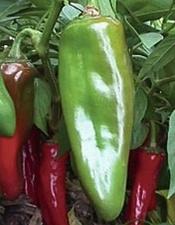Bonnie New Mexico Chiles