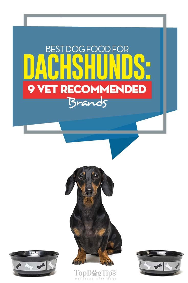 9 Vet Recommended Foods For Dachshunds Best Dog Food Dog Food