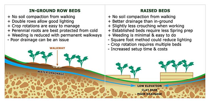 Pros and Cons of an In-ground Row Bed vs a Raised Bed. Advantages of raised beds include: 1) No Soil Compaction  2) Better Drainage  3) Easier Accessibility  4) Less Work for Spring Prep  5) Less Weeding  #RaisedBedGardens